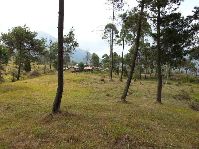 Nangklak Gunung Papandayan (10)