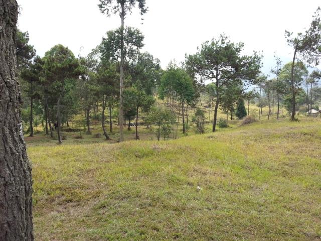 Nangklak Gunung Papandayan (11)