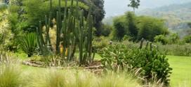 Kebun Mawar Situhapa