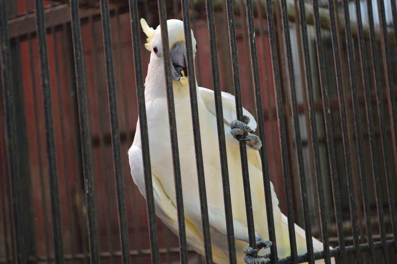 kebun binatang garut cikembulan (2)