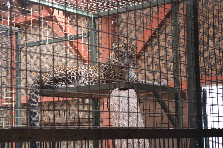 kebun binatang garut cikembulan (4)