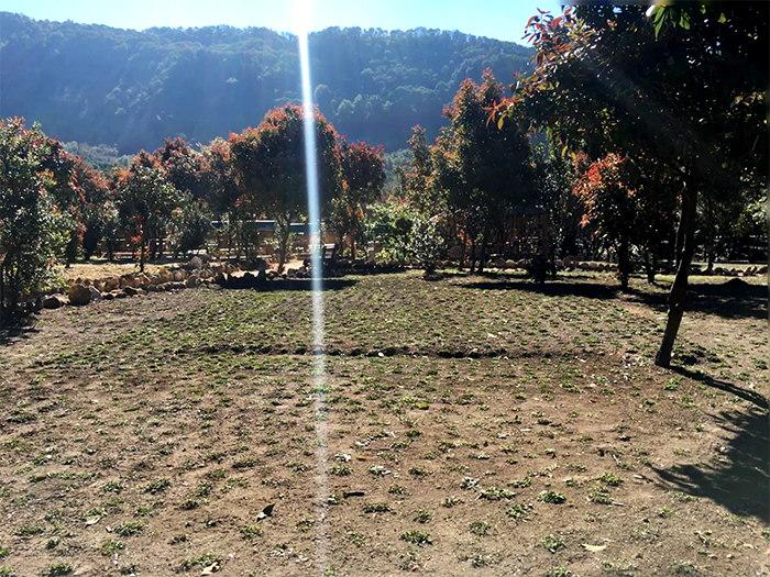 Taman Gunung papandayan