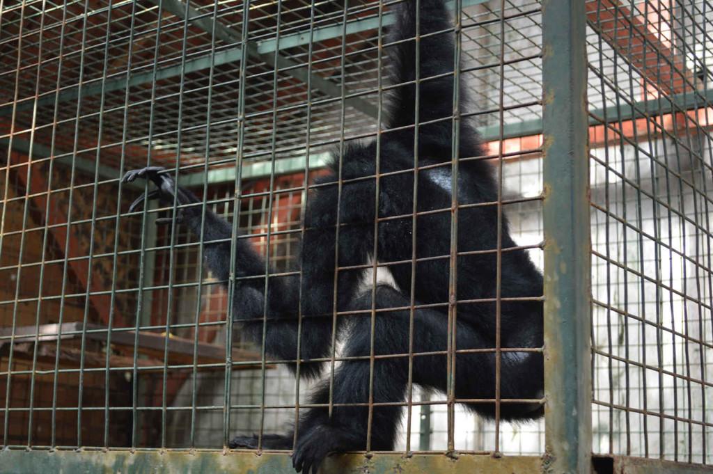 kebun binatang garut cikembulan (6)